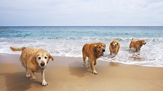 playa para perros
