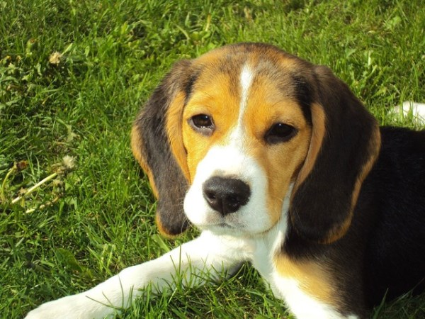 Casas rurales que admiten mascotas