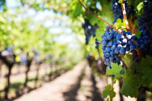 ruta vino lleida