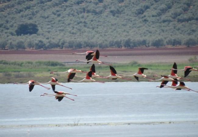 Reserva Natural Laguna Fuentepiedra
