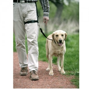 perro paseo rural