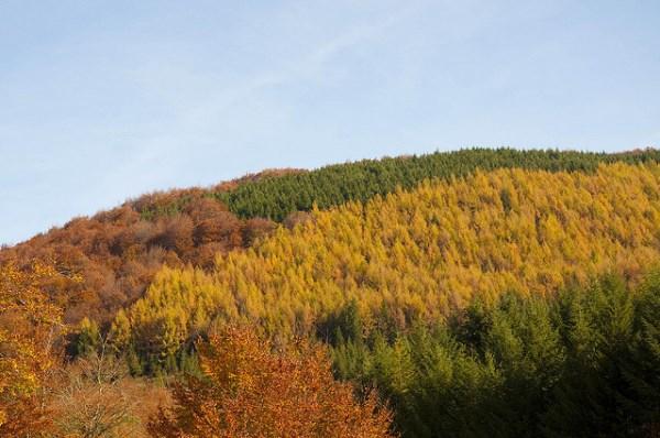 Bosque Navarra