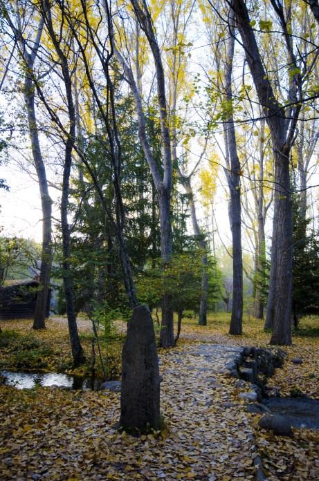 camino bosque de finlandia