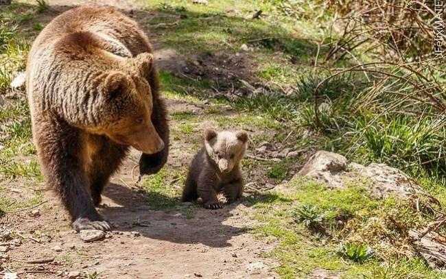 osos el hosquillo