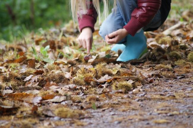 bosque de moal búsqueda castañas