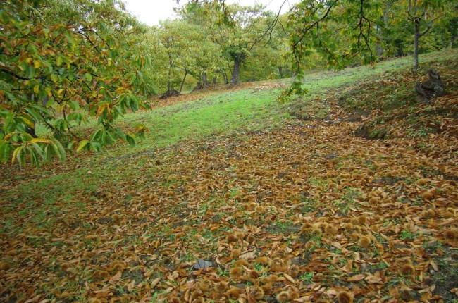 serranía de ronda otoño