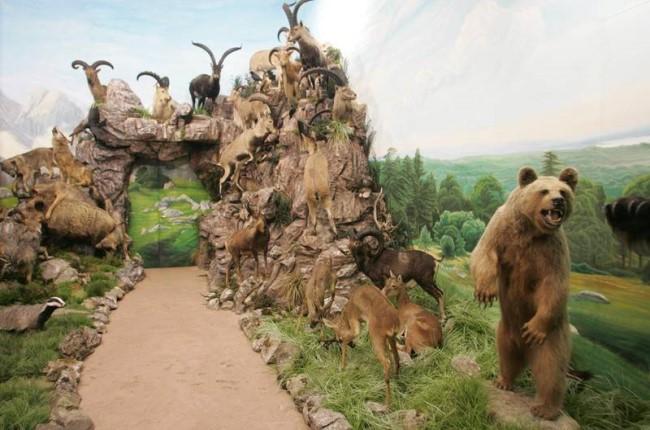 Museo de la Fauna Salvaje Leon