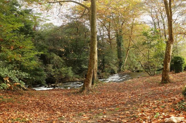 Fuente del Frances Cantabria