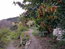 Oferta de Casa Rural Cortijo Buena Vista