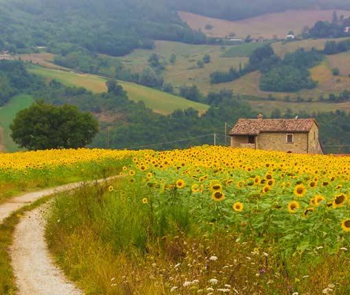 casas rurales de alquiler íntegro